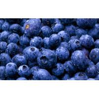 Milkshake Premix Blueberry