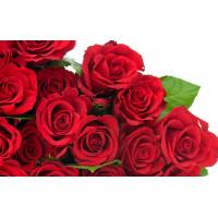 Glucose Premix Rose
